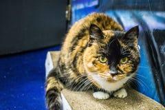 La maison du ` s de chat Photo libre de droits