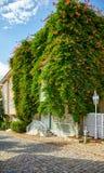 La maison a tressé avec la plante grimpante de Campsis sur la rue du col photos libres de droits