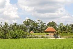 La maison tropicale avec un toit carrelé parmi le riz met en place Bali, Ubud, Indonésie images libres de droits
