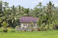 La maison tropicale avec un toit carrelé parmi le riz met en place Bali, Ubud, Indonésie photographie stock