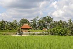 La maison tropicale avec un toit carrelé parmi le riz met en place Bali, Ubud, Indonésie image stock