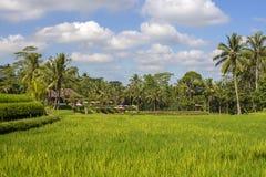La maison tropicale avec un toit carrelé parmi le riz met en place Bali, Ubud, Indonésie image libre de droits