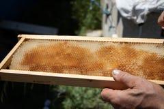 La maladie sur le nid d'abeilles - s'inquiétant images stock