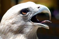 La Malaisie, Langkawi : Aigle célèbre de langkawi Photographie stock libre de droits