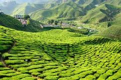 La Malaisie, montagnes de Cameron Images stock