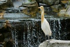 La Malesia Kuala Lumpur Bird Park Fotografia Stock Libera da Diritti