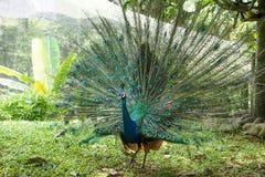 La Malesia Kuala Lumpur Bird Park Fotografia Stock