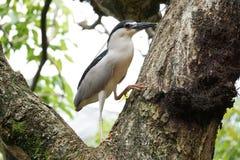 La Malesia Kuala Lumpur Bird Park Fotografie Stock Libere da Diritti