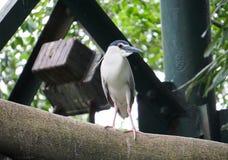 La Malesia Kuala Lumpur Bird Park Immagini Stock Libere da Diritti