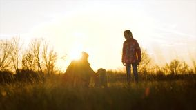 La mamá y la hija están caminando con el perro a través del campo en la puesta del sol Cámara lenta metrajes