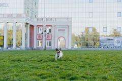 La maman avec la fille et les chiens marchent en parc avec un disque de vol Photo stock