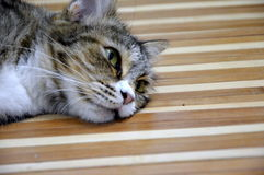 la maman du chaton se sent très fatiguée pour amuser son enfant Image libre de droits