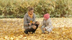 La maman et le bébé rassemblent les feuilles jaunes en parc Image stock
