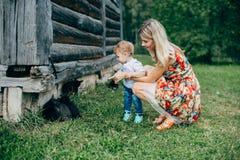 La maman et le fils regardent les chatons Images stock