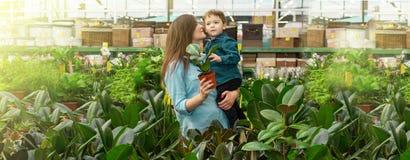 La maman et son b?b? gar?on dans des usines font des emplettes choisissent des usines Jardinage en serre chaude photos libres de droits