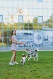La mamma con la figlia ed i cani stanno camminando nel parco con un disco di volo immagine stock