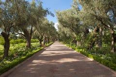 La Mamounia,马拉喀什庭院  免版税库存图片