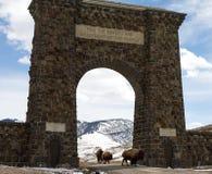 La manada del bisonte emigra a través de arco de la entrada Fotografía de archivo libre de regalías