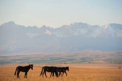 La manada hermosa del caballo de bahía pasta en las montañas en la puesta del sol, fondo natural soleado del inconformista asombr Fotografía de archivo libre de regalías