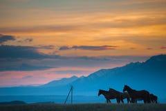 La manada hermosa del caballo de bahía pasta en las montañas en la puesta del sol, fondo natural soleado del inconformista asombr Fotos de archivo