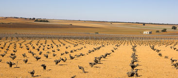 Виноградники в la Mancha Кастилии, Испании. Стоковое Фото