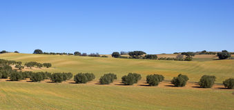 域的全景在卡斯提尔La Mancha,西班牙的。 库存图片