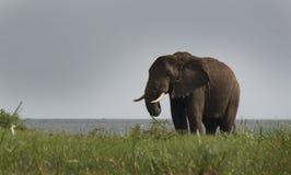 La Manche Ouganda - éléphant de Kazinga Images libres de droits