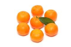 La mandarine fraîche porte des fruits avec les lames vertes sur le blanc Image libre de droits