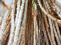 La mandioca después de la cosecha Fotografía de archivo libre de regalías