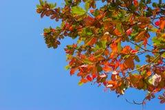 La mandorla del mare va con il ramo di albero su cielo blu immagini stock