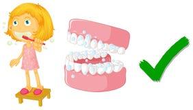 La manera correcta de cepillar los dientes Imagen de archivo libre de regalías