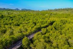 La manera de bosque del mangle Imagen de archivo libre de regalías