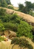 La manera de camas de piedra jain del complejo sittanavasal del templo de la cueva Fotografía de archivo