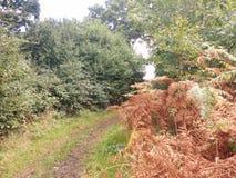 La manera de ir entre los arbustos Foto de archivo