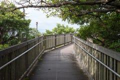 La manera de la trayectoria de caminar en un bosque tropical Fotografía de archivo libre de regalías