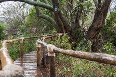 La manera del cuento en las selvas tropicales Fotografía de archivo