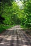 La manera en bosque Foto de archivo libre de regalías