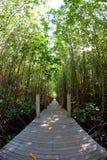 La manera en el bosque del mangle Foto de archivo libre de regalías