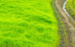 La manera en la granja verde, campo de Tailandia Imagen de archivo