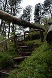 La manera a la cascada en Apatlaco Fotografía de archivo libre de regalías