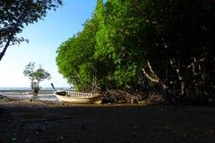 La mangrovia rimboschisce Immagini Stock Libere da Diritti