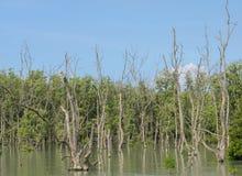 La mangrovia rimboschisce fotografia stock