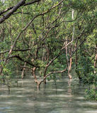 La mangrovia rimboschisce fotografie stock