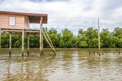 La mangrovia rimboschisce Immagine Stock