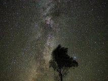 La manière laiteuse tient le premier rôle observer de constellation de Cygnus photo libre de droits