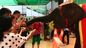 La manifestazione degli elefanti archivi video