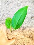 La maniglia progetta l'albero verde in suolo immagine stock