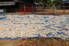 La manioca scolpisce Fotografie Stock Libere da Diritti