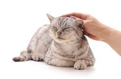 La mano accarezza il gatto fotografia stock libera da diritti