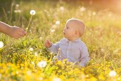 La mano adulta sostiene el diente de león del bebé en el niño de la puesta del sol que se sienta en un meado Fotos de archivo libres de regalías